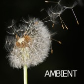 Ambient - Ambient - Ambient Music and Ambient Sounds for Relaxation Meditation, Spa, Massage and Yoga  artwork