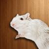MouseMasher