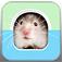 Hamstergram