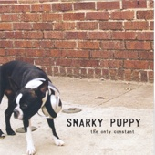 Snarky Puppy - the only constant  artwork