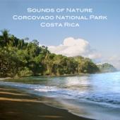 TranscendentalTones - Forest Meets Waves - Bosque y Olas artwork