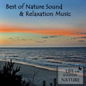 Best Of Nature Sounds And Relaxation Music (with Birds & Singing Bowls)