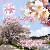 Sakura - The Song of Japanese Cherry Blossoms - Mikan Tomo