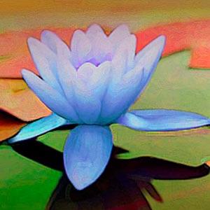 The Oneness Program