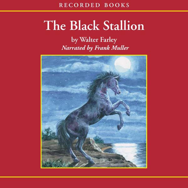 the young black stallion book