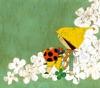 Mahouno Kotoba - Single ジャケット写真