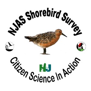 Shorebird Survey Podcast