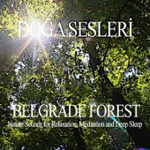 Belgrade Forest - Nature Sounds for Relaxation, Meditation and Deep Sleep