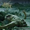Technical&Brutal Death Metal