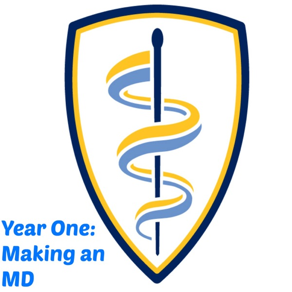 Year One: Making an MD