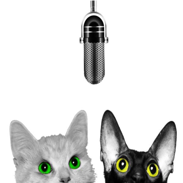 Kattsnackspodden's podcast