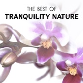The Best of Tranquility Nature: New Age Sounds & White Noise Collection for Healing Spa Massage, Yoga, Deep Sleep & Total Relaxation