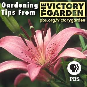 The Victory Garden | PBS