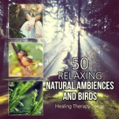 50 Relaxing Natural Ambiences and Birds: Healing Therapy Songs for Yoga Meditation, Music for Spa, Massage, Soothing Sounds for Sleep