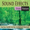Sound Effects from Nature Ocean Waves Falling Rain Forest Water Cricket Night Sounds Nature Sounds