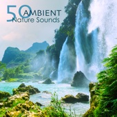 Underwater Sounds and Calming Peaceful Song