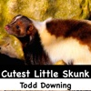 Cutest Little Skunk - Single