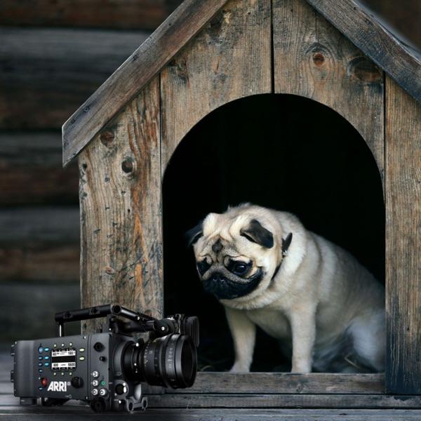 The Video Dogpound