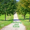 Birds Song and Forest, Vol.1 - EP