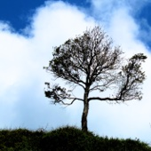 Sad Sadness (Piano & Orchestra) - Melancholic Music Sentimental Emotional Instrumental Love Song - Sad Piano Music Instrumental Collective Australia
