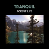 Tranquil Forest Life – Harmony of Fire, Chirping Birds and Sounds of Natural Univers for Meditation in Nature Space, Yoga Kundalini Breathing & Mindfulness