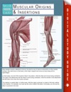 Muscular Origins  Insertions Speedy Study Guides