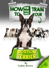 How To Train Your Boston Terrier