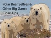 Polar Bear Selfies  Other Big Game Close-Ups