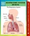 Respiratory System Human Speedy Study Guides