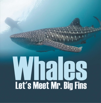 Whales - Lets Meet Mr Big Fins
