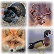 Pro Animal Calls app review