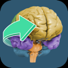 FINR Brain Atlas