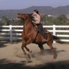 Horse Training Updates