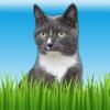 Pet Sounds - Fun Animal Noises for Kids