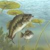 U.S. State Fish