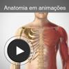 Anatomia em animações