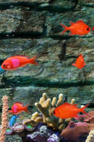 MyReef 3D Aquarium Screenshot 4