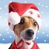 Christmas Pet Countdown Free - How many sleeps to Christmas?