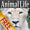 Animal Life HD Free