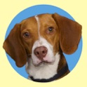 Roscoe The Bed Bug Dog icon