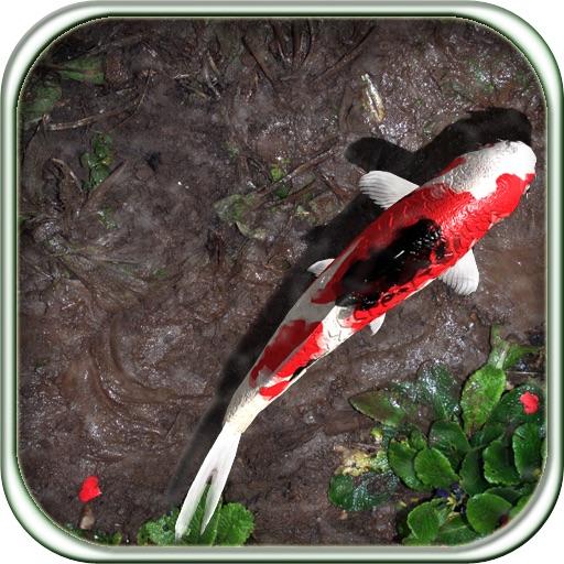 Pocket Pond HD iOS App