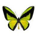 Butterfly Collection icon
