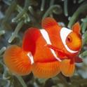 Fish Base icon