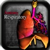 Anatomy Respiratory 3D Organs