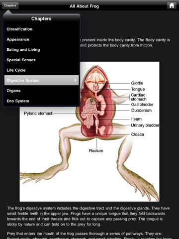 Frog Dissection Screenshot