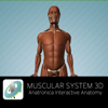 Muscular System 3D - Anatronica Interactive Anatomy