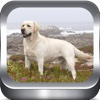 Dog Breeds Photo Catalog HD