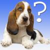 犬の品種クイズ