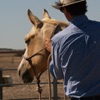 Silversand Horsemanship - Equestrian Groundwork and Horse Back Riding from Australia