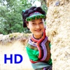 我的高原 HD